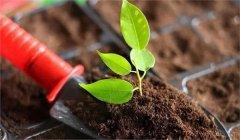 土壤检测的过程是什么样的