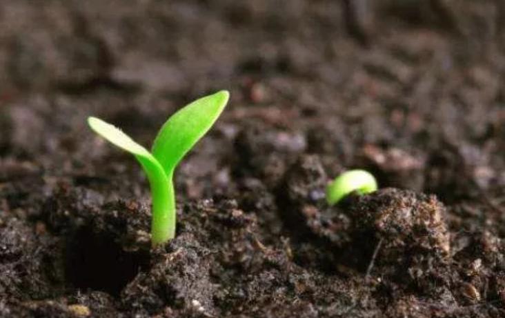 研究土壤障碍因素的土样